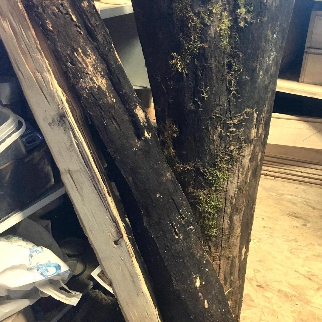 Grumes de robinier faux acacia (vulgairement acacia) fendues, au moins 10 ans de séchage.